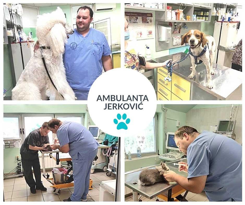 veterinarska-klinika-kontakt-veterinarska-ambulanta-vetplanet-dezurni-veterinar