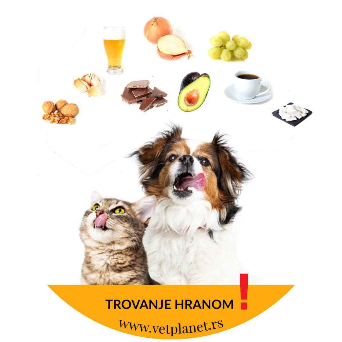 trovanje pasa hranom vetplanet veterinarska ambulanta