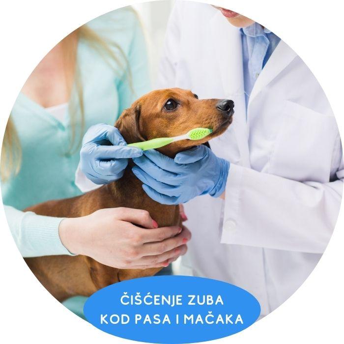 Čišćenje zuba kod pasa i mačaka Vet Planet Clinic Beograd dežurni veterinar