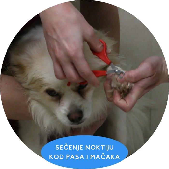 Sečenje noktiju koda pasa i mačaka Vet Planet Clinic Beograd dežurni veterinar